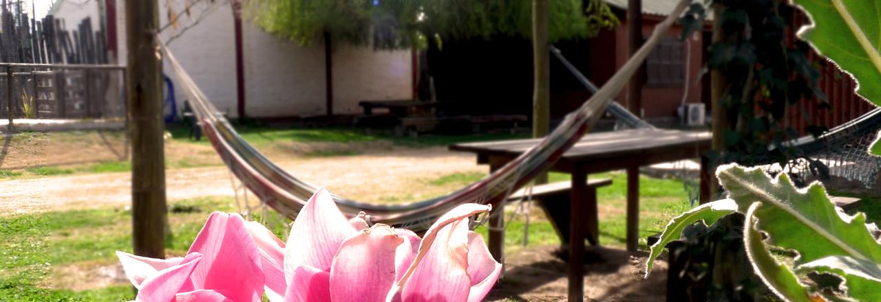 Vista del espacio común donde se observan las hamacas y una flor en primer plano